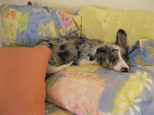 18 weeks_pillow