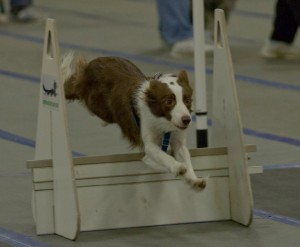 Flyball 2-124-L