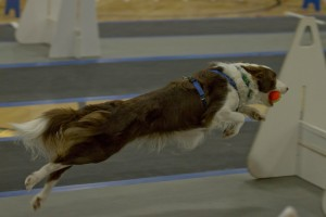 Flyball 2-52-L